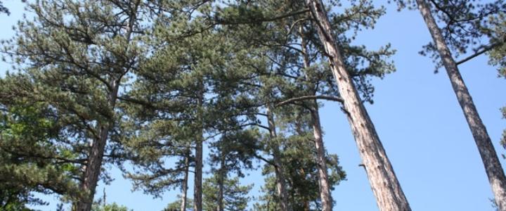 Šume u dobrom stanju