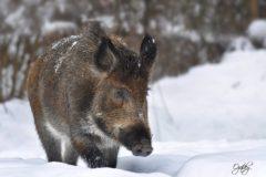 Životinje jače od mraza