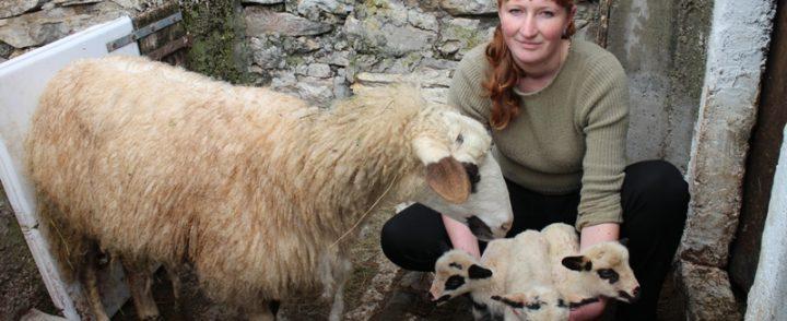 U selu Vratkovići ovca ojagnjila četvoro