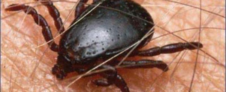 Ujed krpelja i ostalih insekata u prirodi-kako se zaštititi?