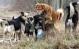 Psi lutalice-Ima li rješenja?
