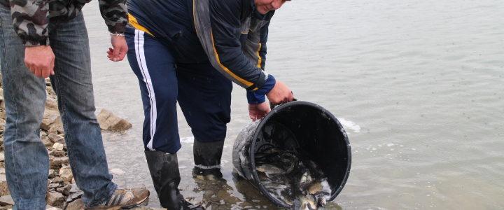 Redovno godišnje poribljavanje na jezeru Desivoje