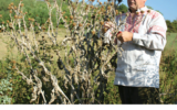 Zvanična medicina zanemaruje isceljujuću moć biljaka
